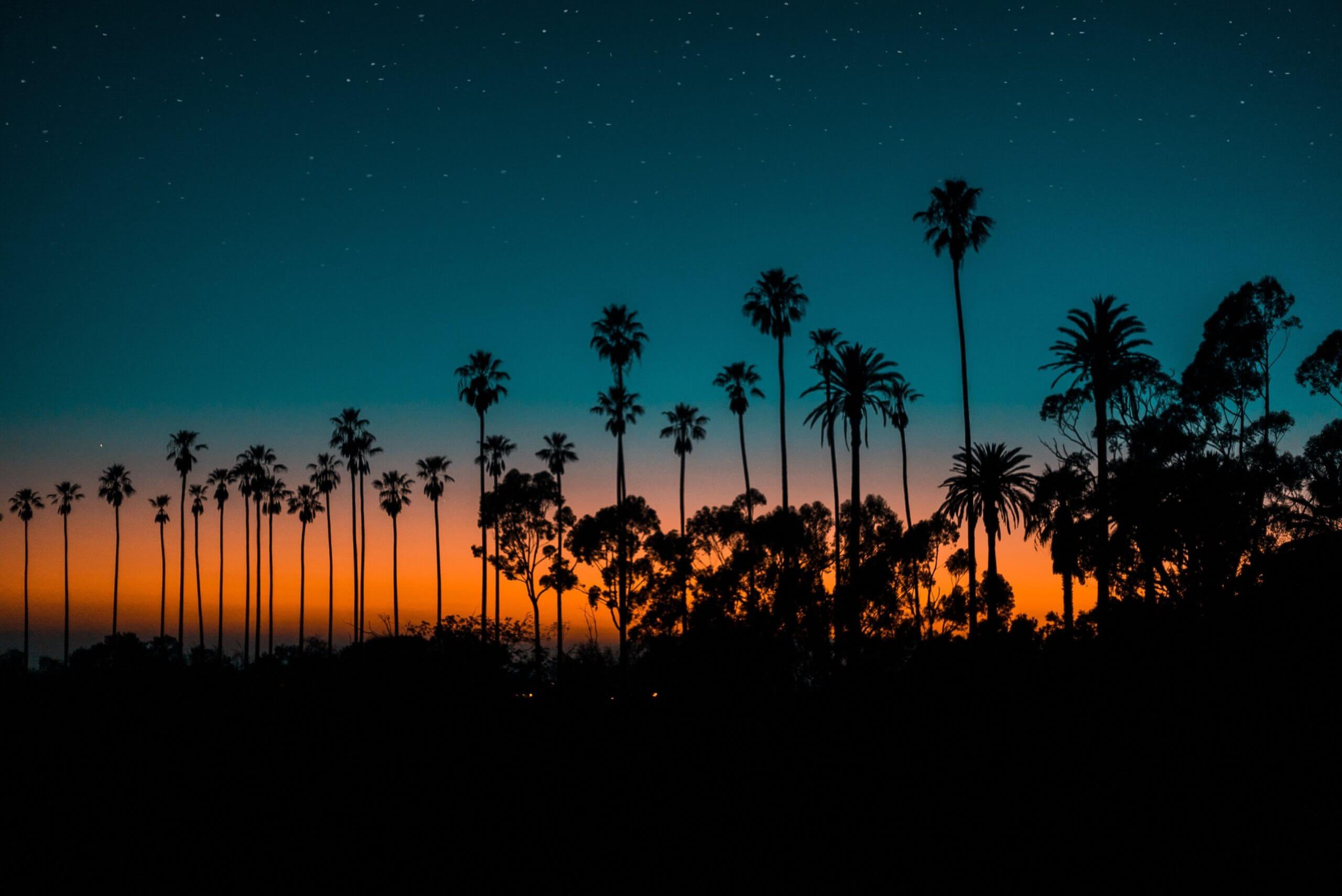 Palm Trees at Dusk Los Angeles, CA